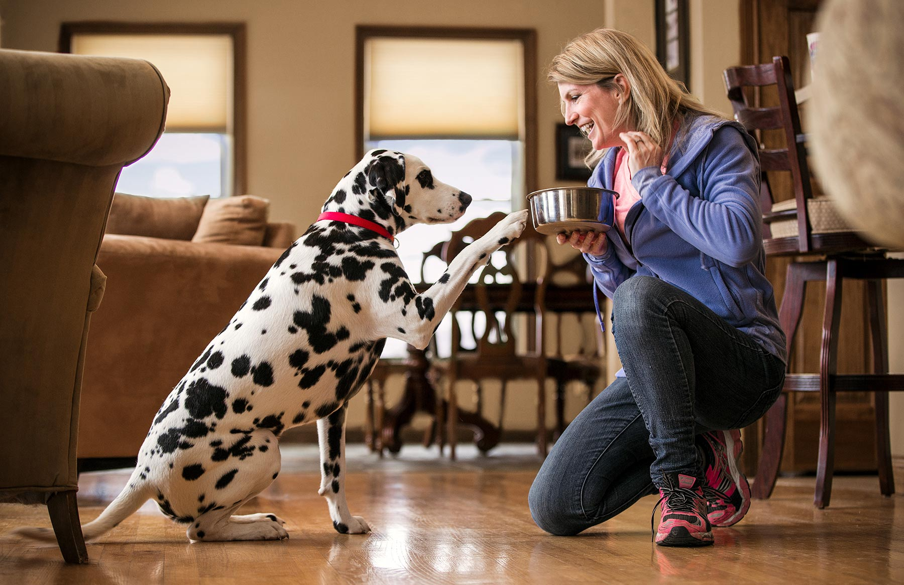A-woman-feeding-her-Dalmation