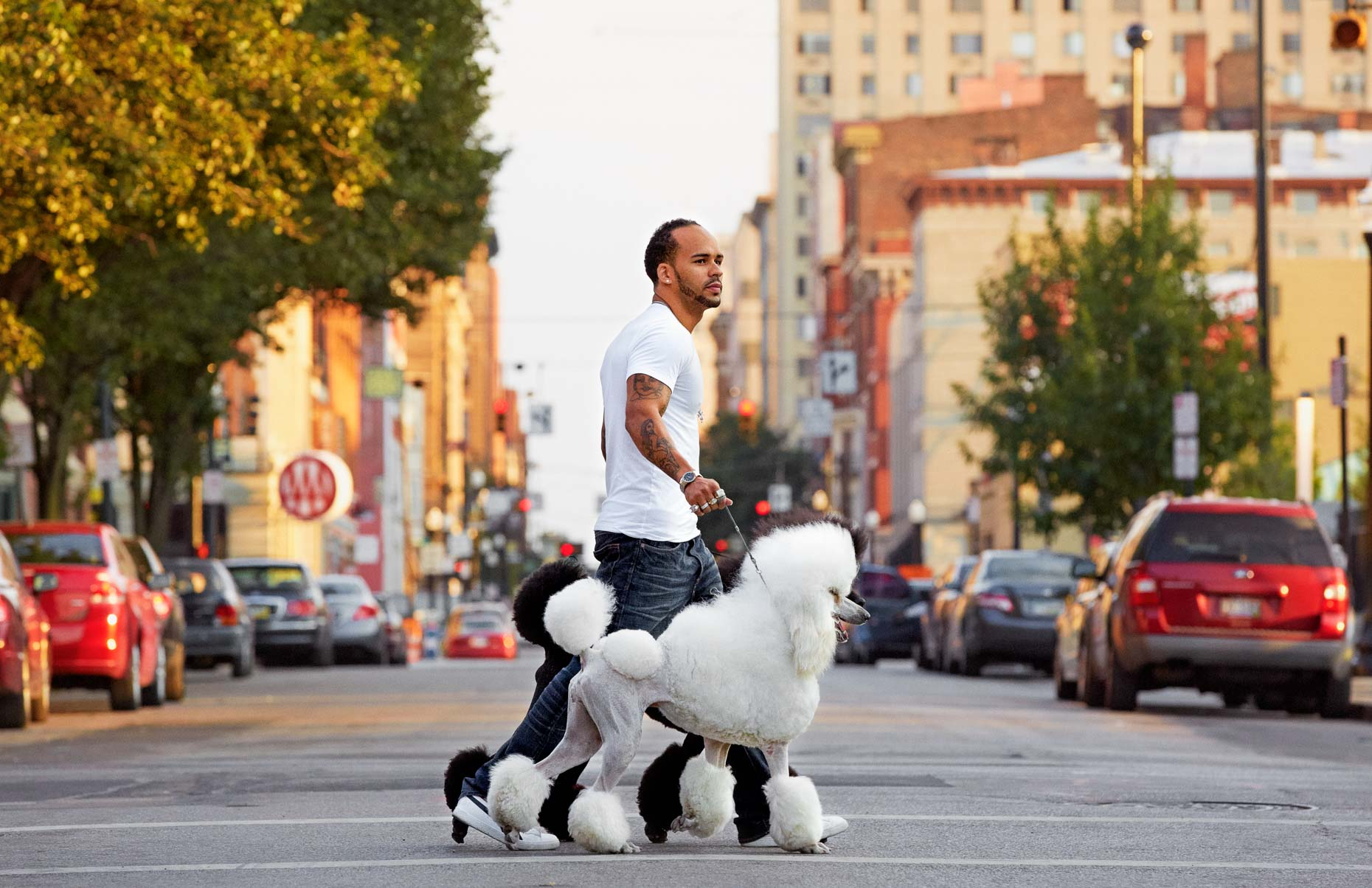 A-man-walking-two-Standard-Poodles-through-the-city