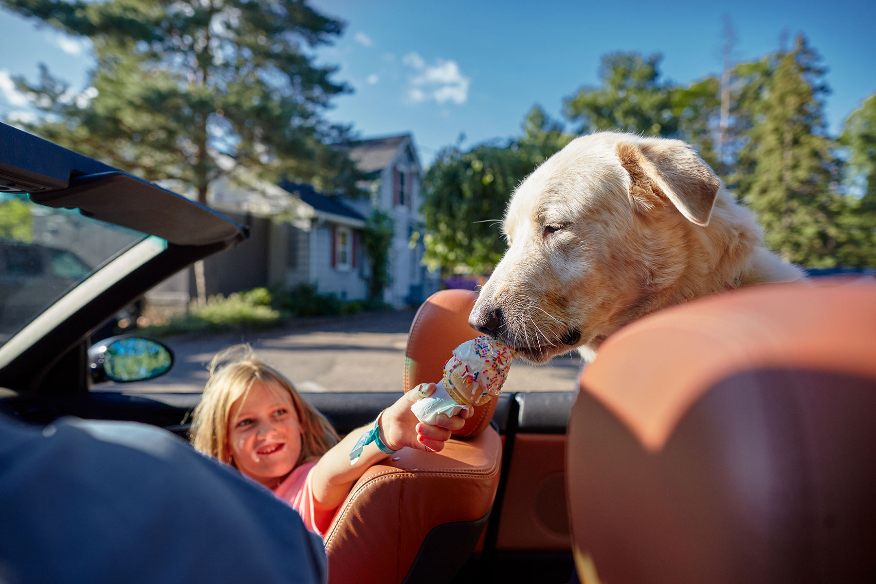 A-young-girl-feeding-ice-cream-to-a-Yellow-Labrador-dog-in-the-back-seat-of-a-car