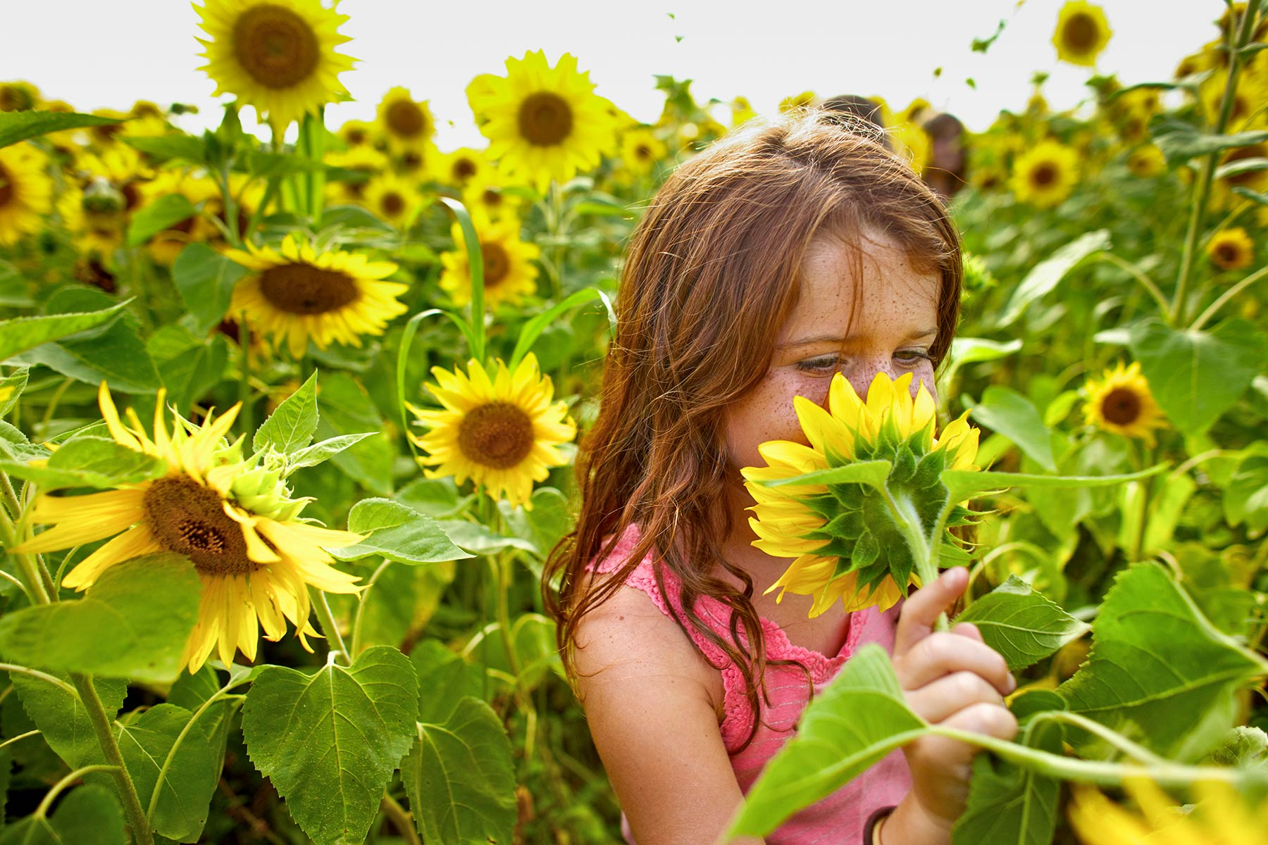 A-portrait-of-a-little-girl-smelling-a-sunflower-in-the-middle-of-a-sunflower-field