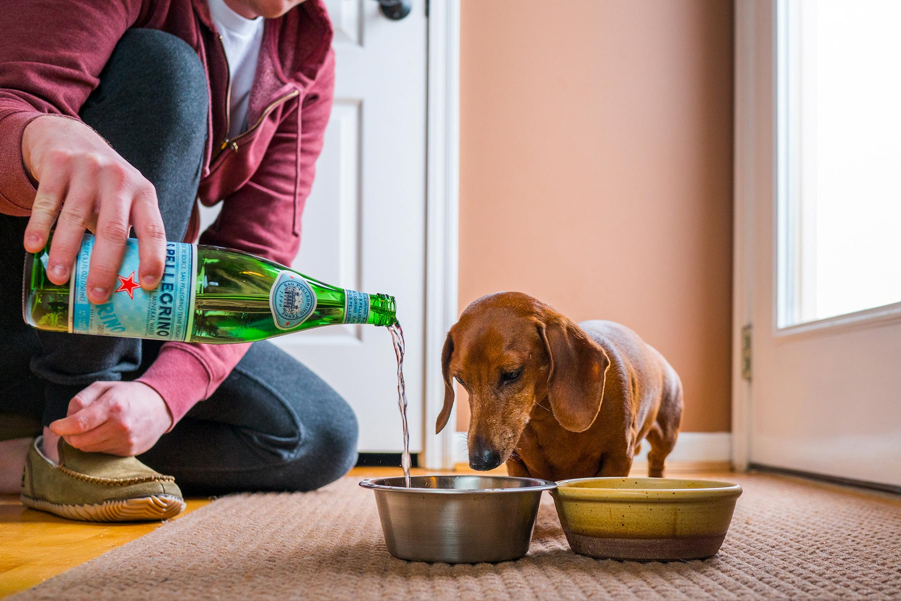 A-young-man-giving-his-Dachshund-water-from-a-bottle