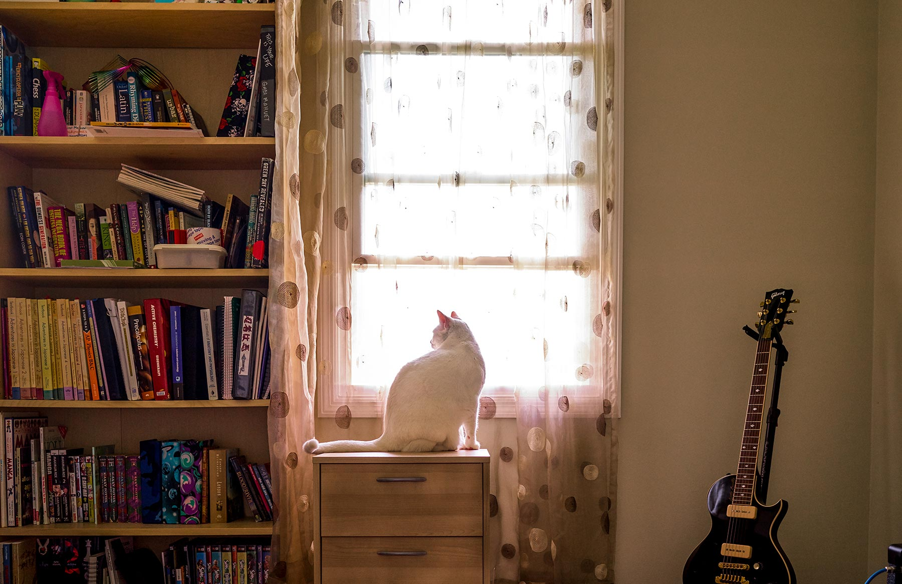 A-portrait-of-a-white-cat-sitting-in-front-of-a-bedroom-window