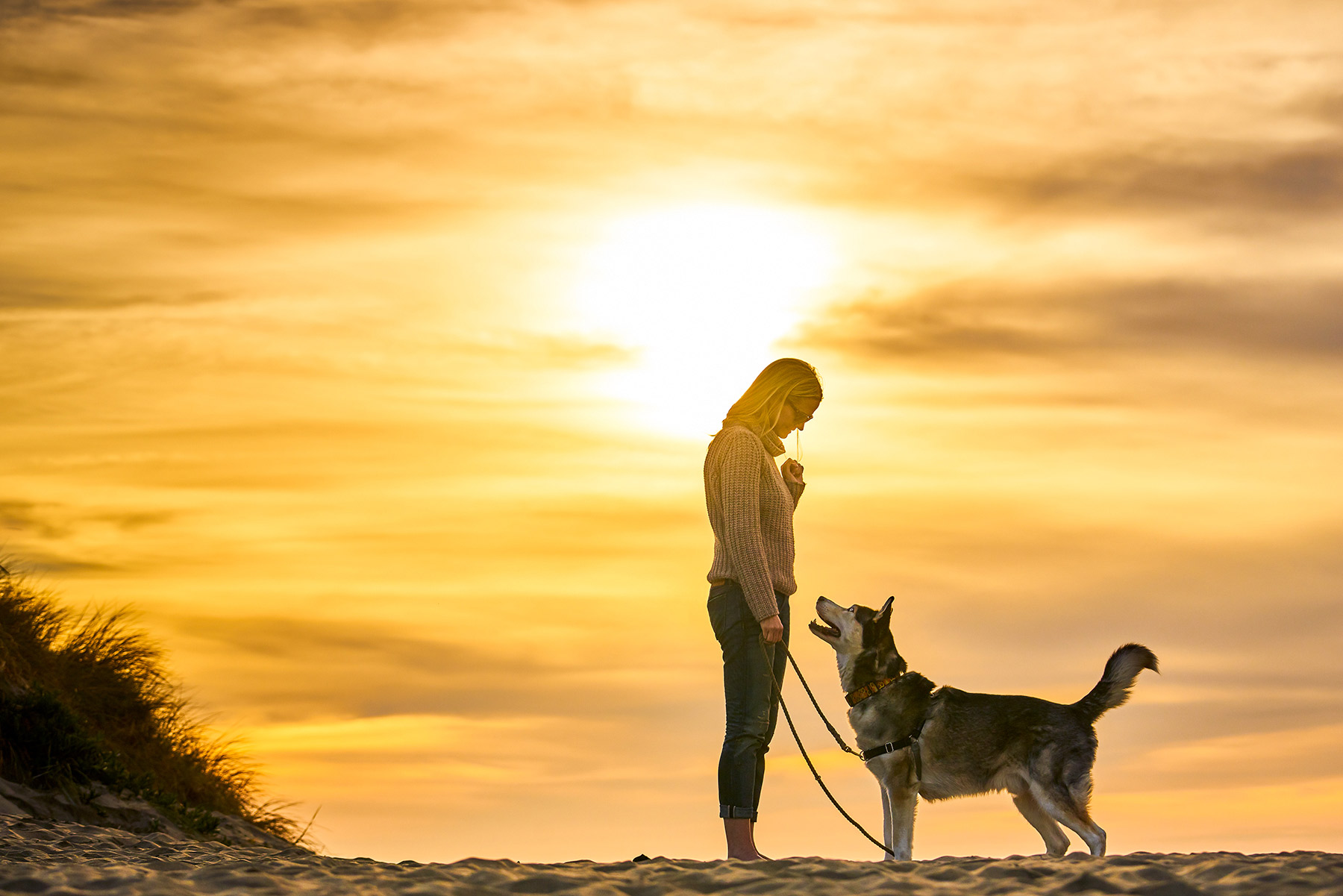 A-woman-bonding-with-her-Siberian-Husky-on-the-beach-against-the-setting-sun