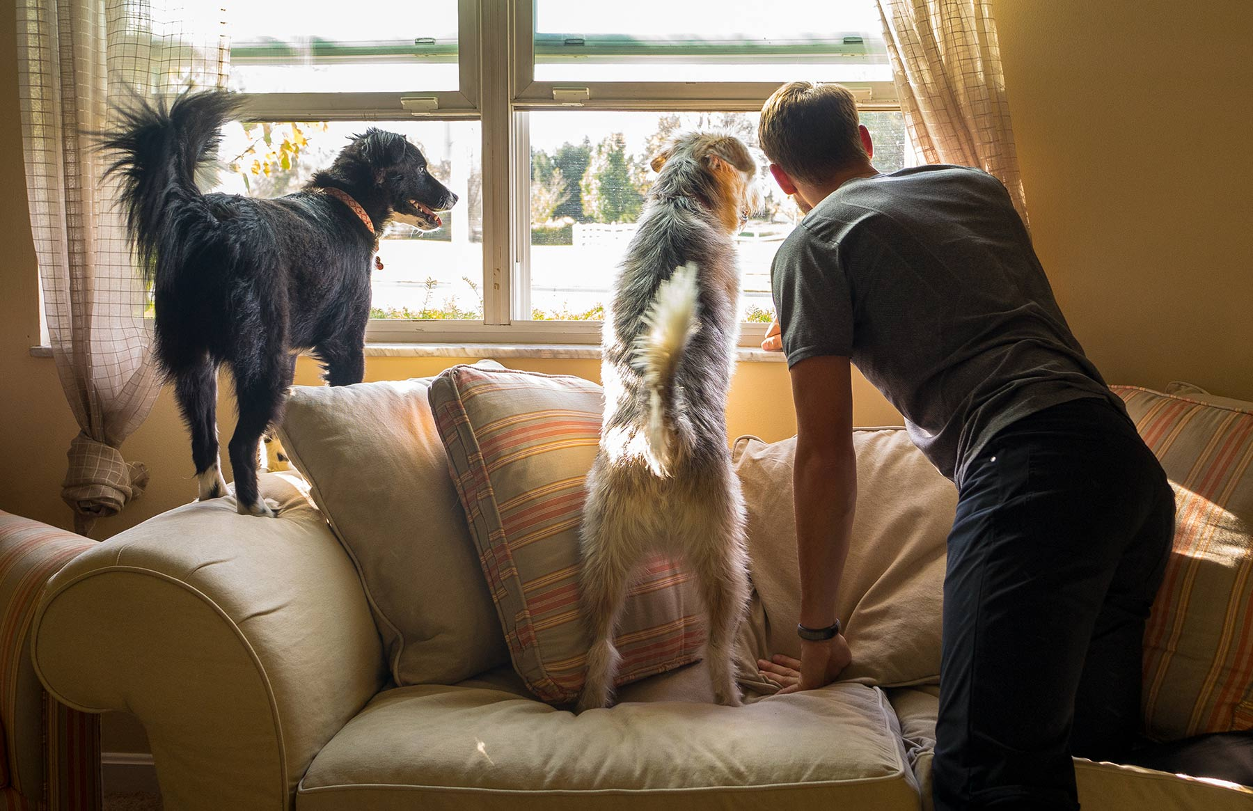 A-young-man-and-his-two-dogs-looking-out-the-front-window