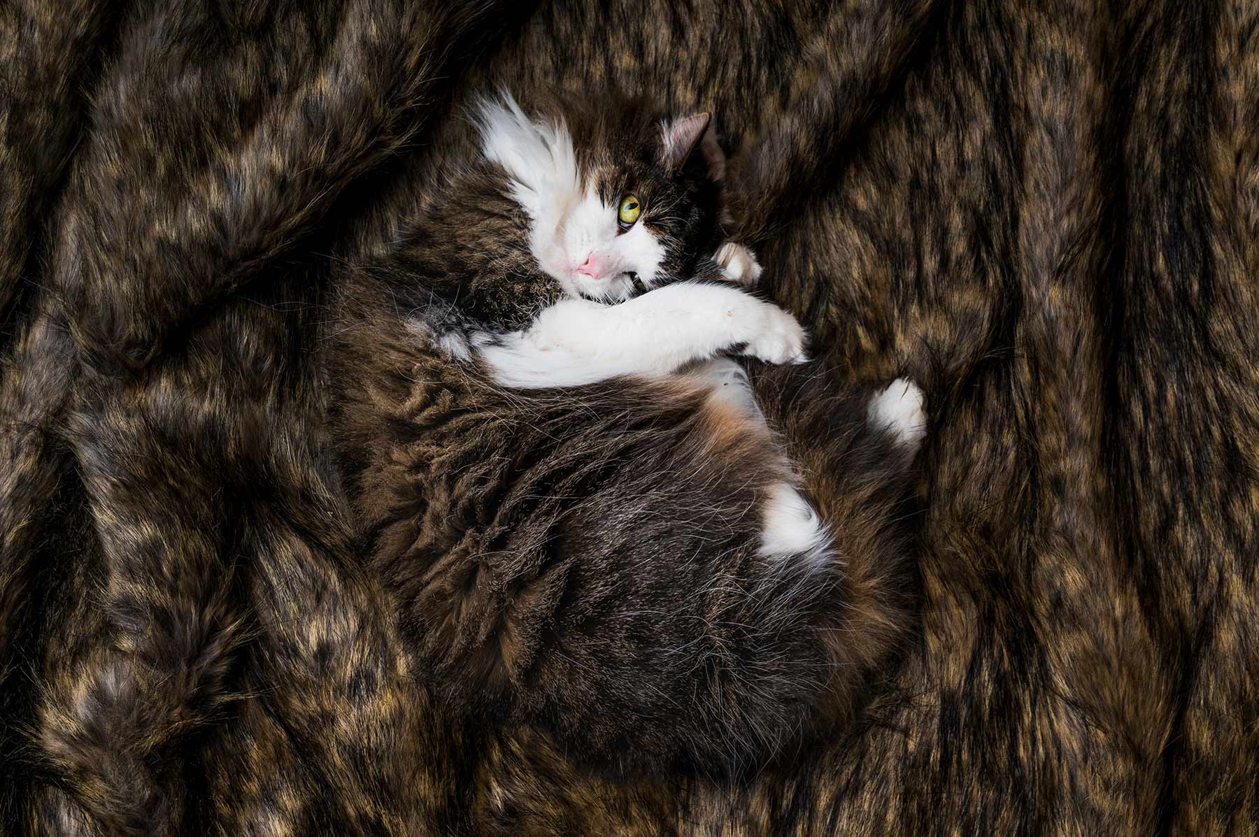 A-portrait-of-a-fluffy-striped-cat-curled-up-on-a-soft-blanket